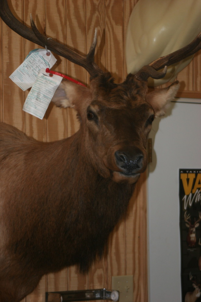 game heads taxidermy