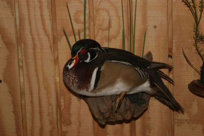 Bird Taxidermy