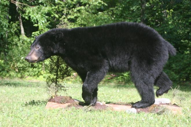 Mammal Mount